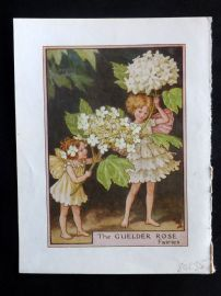 Cicely Mary Barker C1945 Flower-Fairy Print. Guelder Rose Fairies